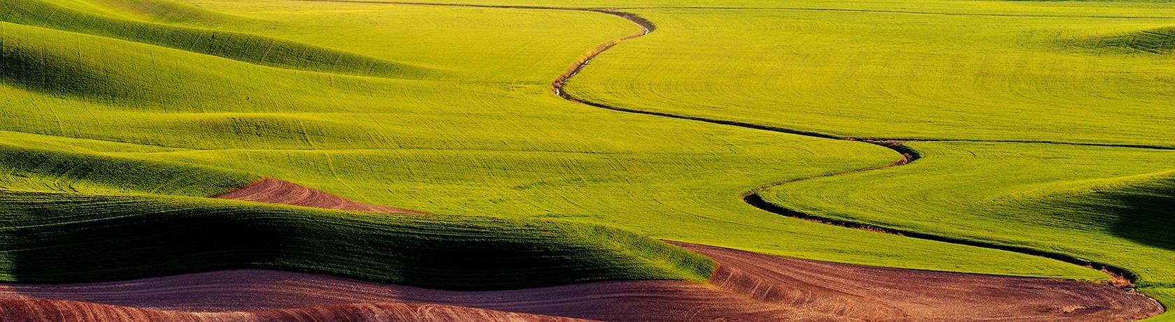 palouse-hills